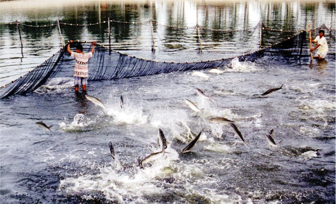 Điều kiện đầu tư nuôi trồng thủy sản